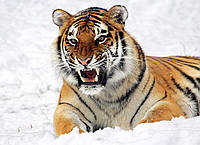 Картина Тигр в снегу на натуральном холсте Артприз 70х110см (ДКШ16/70110/89), фото 1