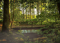 Картина Лесной ручей на натуральном холсте Артприз 50х60см (Л8/5060/142), фото 1