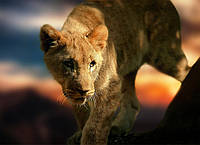 Картина Львица на охоте на натуральном холсте Артприз 60х70см (ДКШ21/6070/94), фото 1