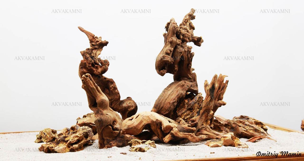 Композиция Дракон + Коралловое дерево К22 (от 80л)