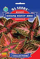 Колеус Визард Колор микс компактний с фантастическими красными расцветками, упаковка 10 шт