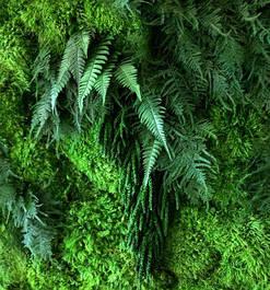 Декоративні рослини стабілізовані