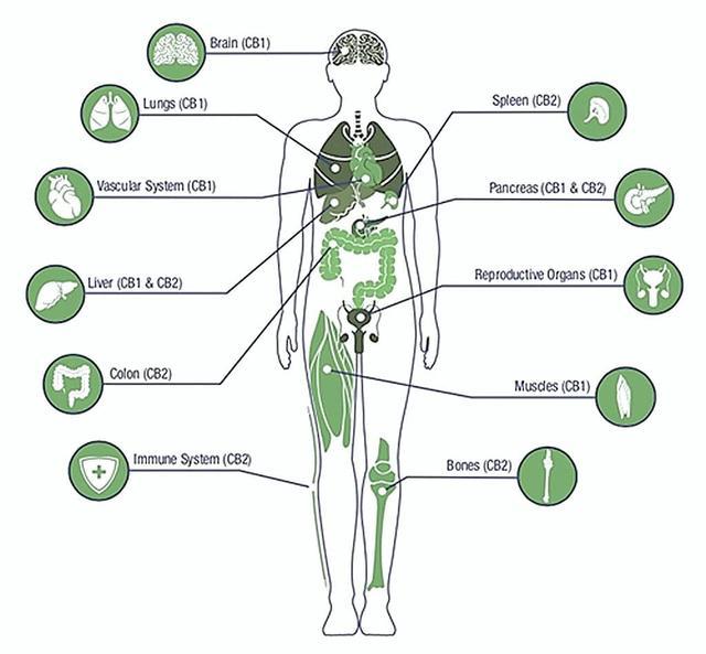 CBD Edens Herbals Oil Tincture