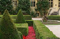 Симметрия в саду