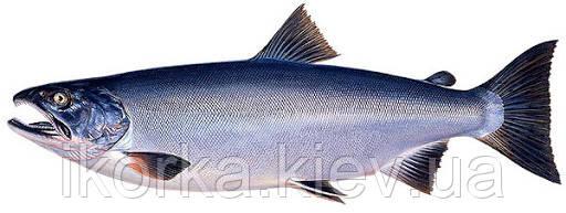Риба кижуч смачний і корисний продукт