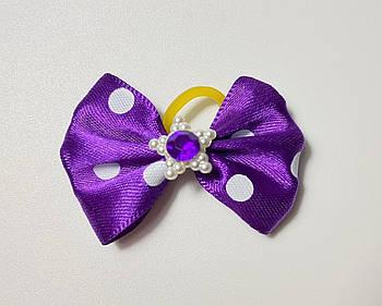 Бантик для собак фиолетовая звезда, 4,5 см