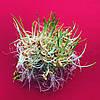 РОСТКИ ЯЧМЕНЬ ПРОРОСТКИ микрогрин  микрозелень органические Sadove 50 г