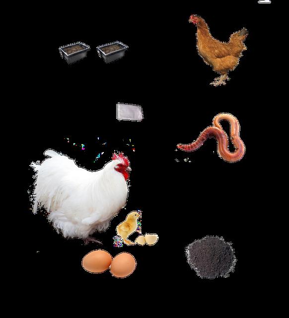 Производство и реализация сельскохозяйственных продуктов