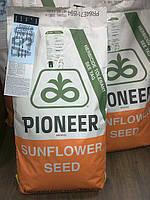 Семена подсолнуха пионер П64ЛЕ25 (P64LE25)