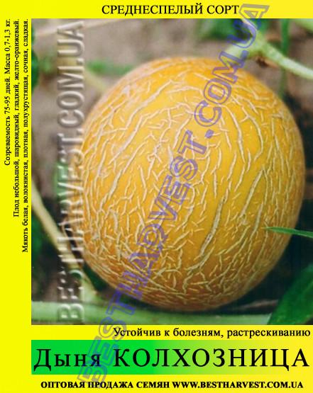 Семена дыни Колхозница 10 кг (мешок)