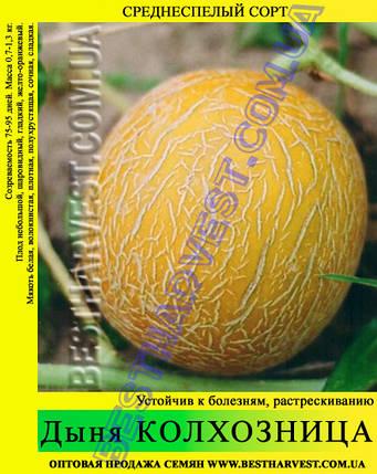 Семена дыни Колхозница 10 кг (мешок), фото 2