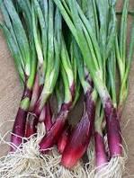 Семена лука многолетнего Батун (красный) японский
