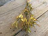 Нігела східна, сухоцвіт, 12 шт. коробочок, h-20 см., 25 грн., фото 5