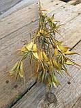 Нігела східна, сухоцвіт, 12 шт. коробочок, h-20 см., 25 грн., фото 6