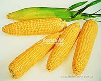 Кукуруза цукрова Леженд F1 1 кг. Clause, фото 1