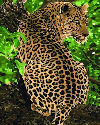 KH4101 Раскраска по номерам Леопард на дереве, Без коробки, фото 2