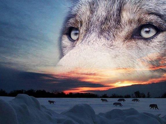 КДІ-0956 Набір алмазної вишивки Виразний погляд вовка, фото 2