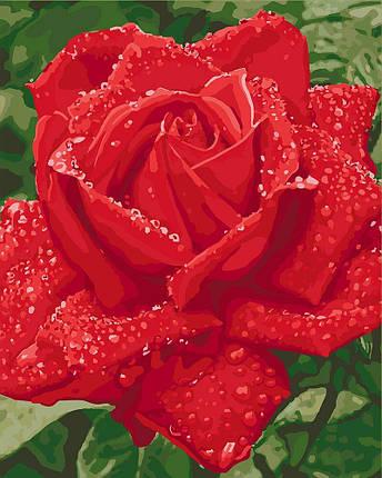 KH3045 Розмальовка - картина за номерами Ніжність троянди, Без коробки, фото 2