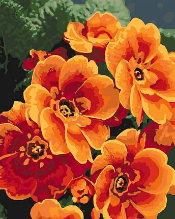 KH3050 Раскраска- картина по номерам Оранжевые примулы, Без коробки, фото 2