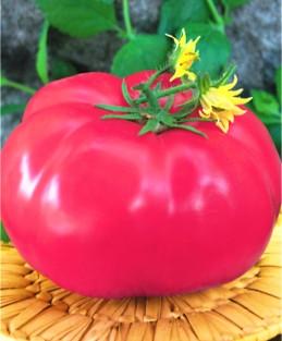 Семена томатов Кардинал
