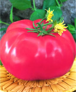 Семена томатов Кардинал, фото 2