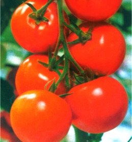 Семена томатов Яблонька Росии