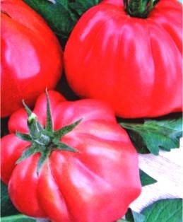 Семена томатов Шарпей розовий, фото 2