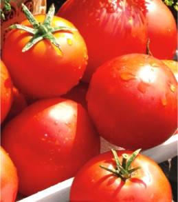 Семена томатов Балада, фото 2