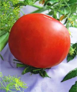 Семена томатов Северная королева суперскороспелый, фото 2