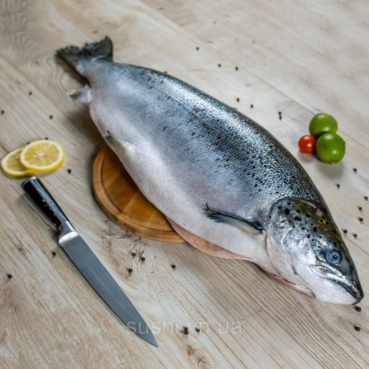 Тушка лосося с головой охлажденная 5-6кг