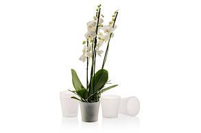 Горшок для орхидеи Gardenya 1,2 л прозрачный, фото 2