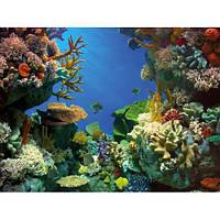 Фон Tetra Shark&Coral