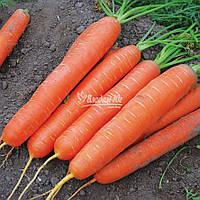 Морков Сатурно F1 25 000 с. Clause, фото 1