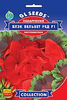 Пелларгония F1 Блек Вельвет Ред уникальная обильно цветущая зональная высотой 35-40 см, упаковка 5шт