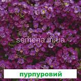 Аліссум Кристал (лавандовий) 100 шт. мультідраже, фото 2