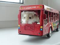 Хомячок Роборовского - самый карликовый хомячек, фото 1