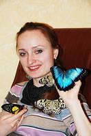 Живые бабочки - продажа готового бизнеса, франшиза.