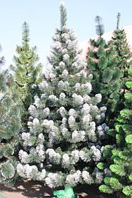 Ёлка европейская зелёная иголки леска ПВХ Италия,кончик в снегу 2.2