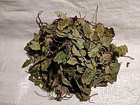 Грушанка круглолистная, трава Дикий ладан