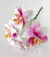 Лилия бело-розовая 5 шт. 25мм, фото 1