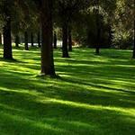 Теневой газон( Садово-парковый газон) от 5 кг