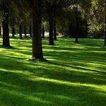 Теневой газон( Садово-парковый газон) от 10 кг