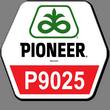 П9025 / P9025  ФАО 330  ПИОНЕР / PIONEER (Импорт/2015г.)