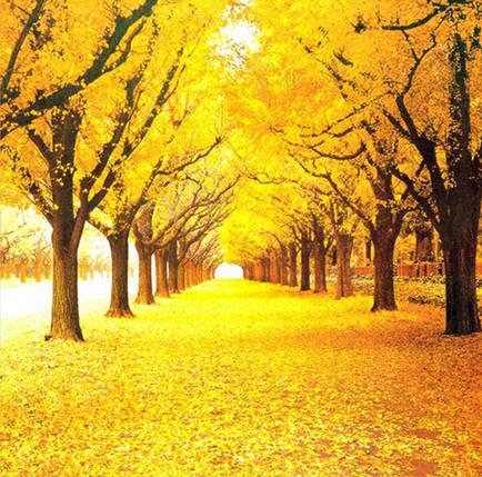 """Набор для творчества алмазная мозаика """"Желтая листва"""", 30*40 см, без рамки, H8023, фото 2"""