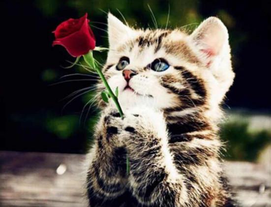 """Набір для творчості алмазна мозаїка """"Кошеня з розою"""", 30*40 см, без рамки, H8041"""