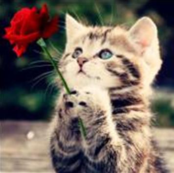 """Набір для творчості алмазна мозаїка """"Кошеня з розою"""", 30*40 см, без рамки, H8179"""