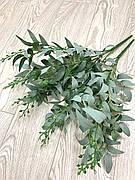 Декоративный рускус ( иглица 50 см )