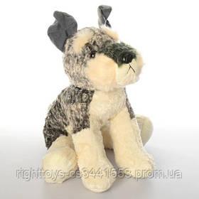 Мягкая игрушка 10227 (100шт) собачка, в кульке, 35см