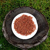 Дикий красный рис ОПТ, фото 1