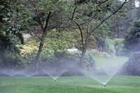 Засухо и жароустойчевый газон от 5 кг